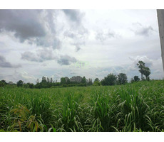 29+ rai of Village Land 34km North of Buriram